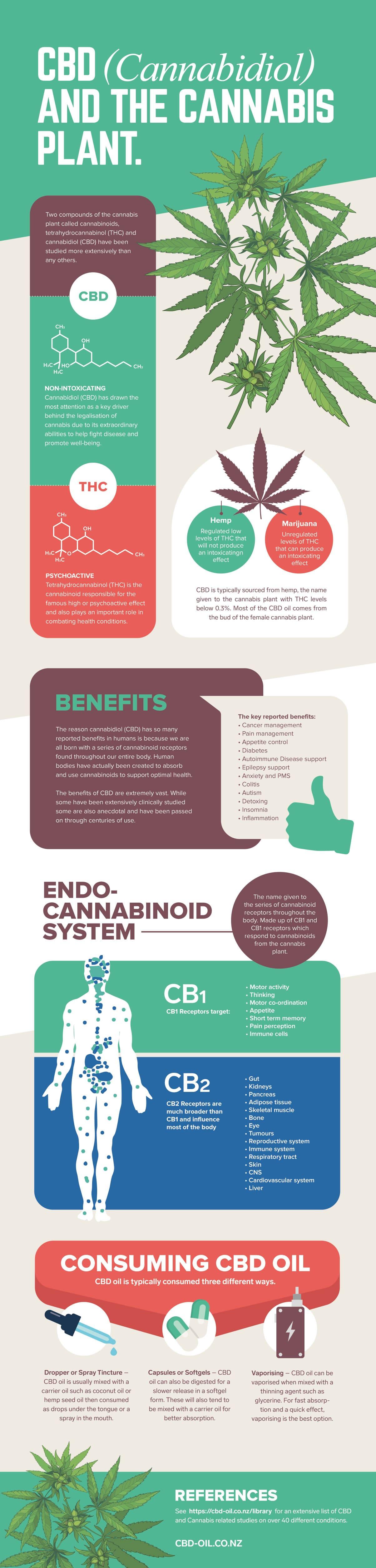 Cannabis CBD Infographic