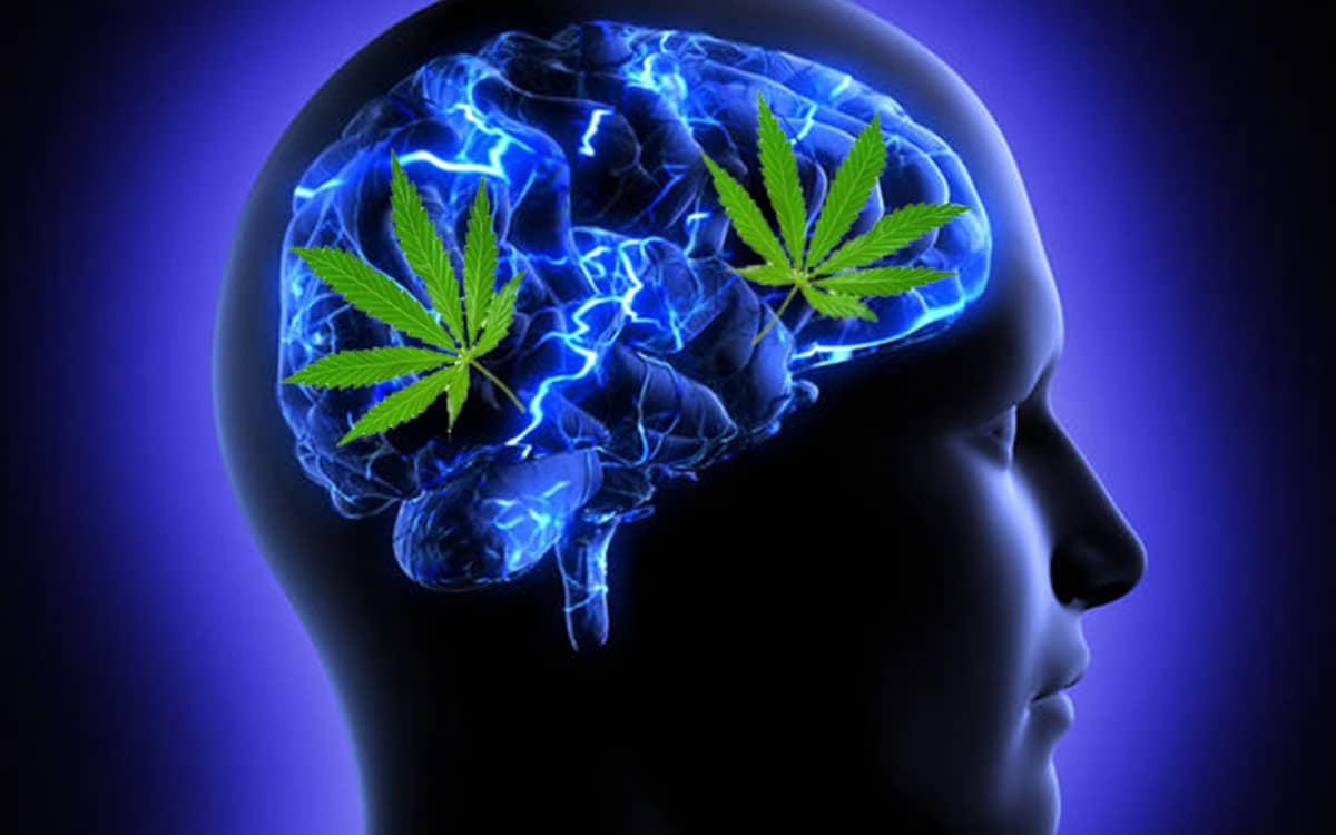 Cannabinoids on Inflammation | CBD OIL NZ