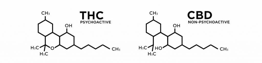 THC vs. CBD   CBD OIL NZ